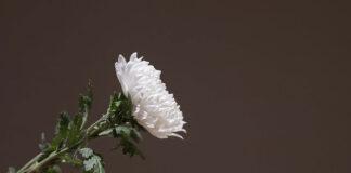 Godny pochówek krok po kroku : niezbędne formalności i wybór zakładu pogrzebowego